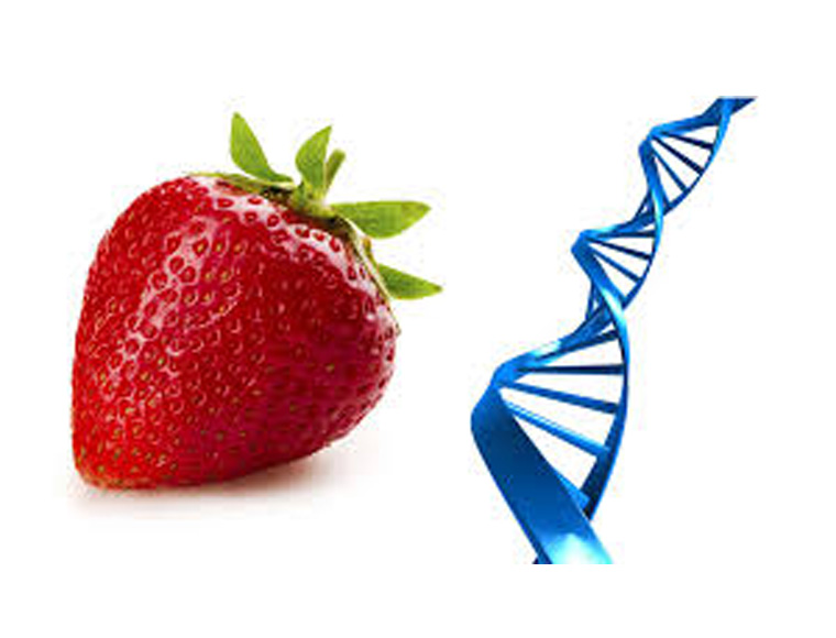 DNA nutriexplorer